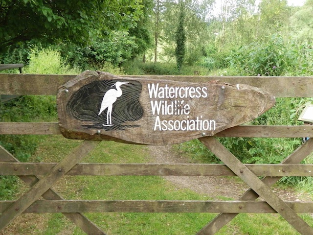Watercress Wildlife Association