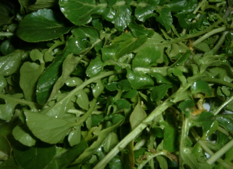 watercress loose